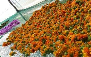 essiccazione-fiori